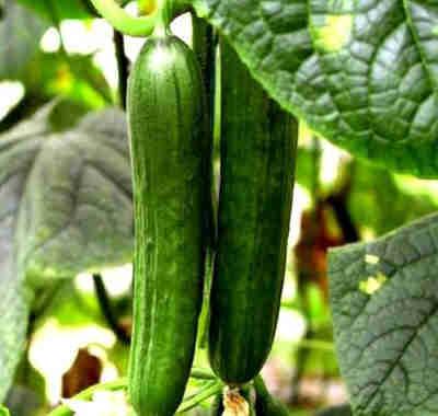 怀柔有机蔬菜生态园