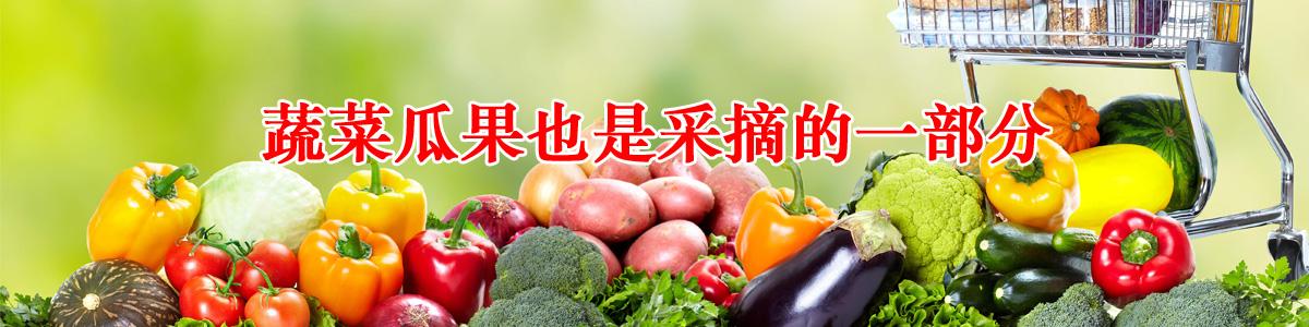 采摘资讯京郊采摘草莓已经成为人们生活的一部分