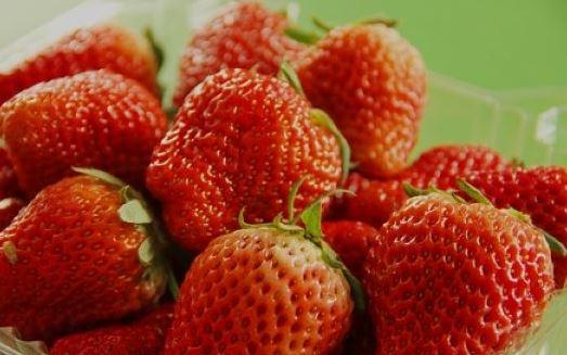 怀柔桥梓镇草莓采摘好去处桥梓镇东茶坞村红莓园