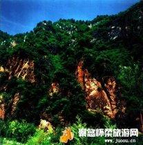 崎峰山国家森林公园主要分布有落叶松林、辽东栎林、