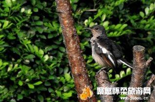 北京怀柔崎峰山国家森林公园观看各种野生动物