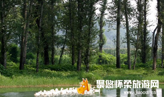 """鹅和鸭农庄特别推出""""植树节,献爱心""""大型公益活动"""