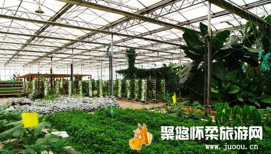 三山蔬菜产销合作社果蔬采摘周末休闲方式