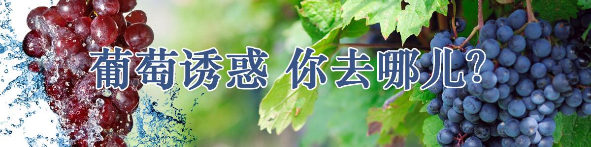 采摘资讯三山蔬菜产销合作社果蔬采摘周末休闲方式