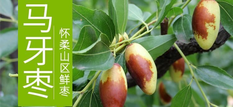 怀柔山坡马牙枣,35元/6斤/盒全国包邮