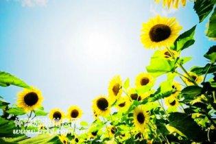 """响水湖举办""""我们的队伍向太阳""""主题游园活动"""